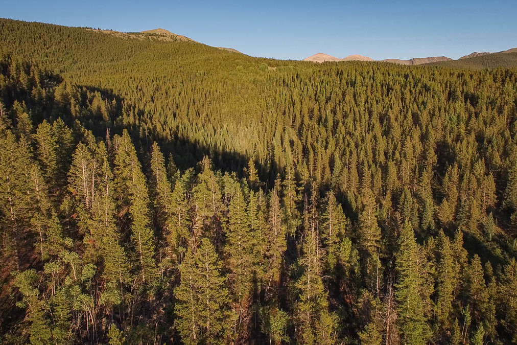 drone-footage-forest-colorado-100