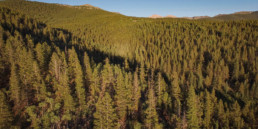 drone-footage-forest-colorado-100